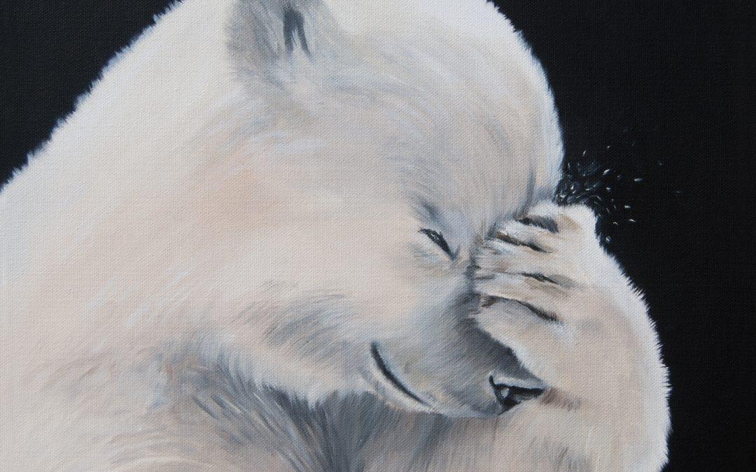 Animal social, nouveau projet artistique