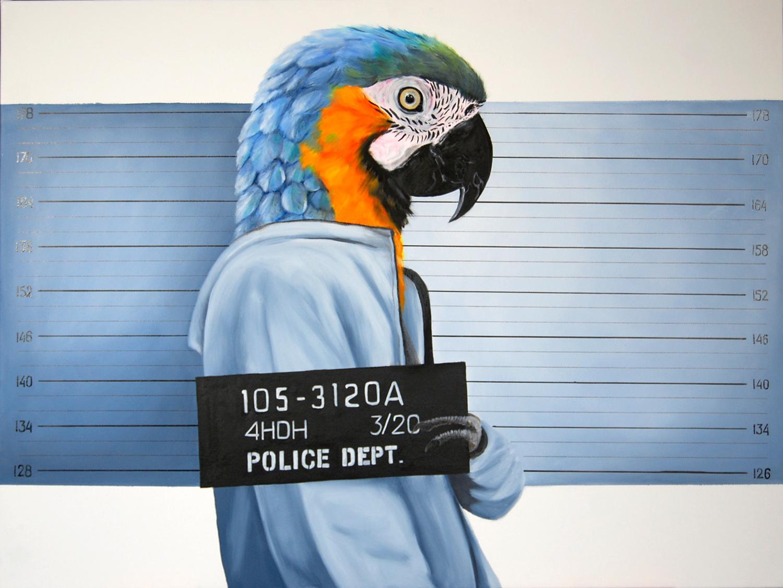 Perroquet-animal-social